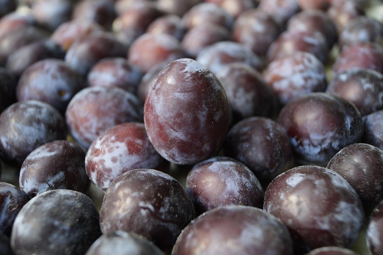 plum, fruit, red plum