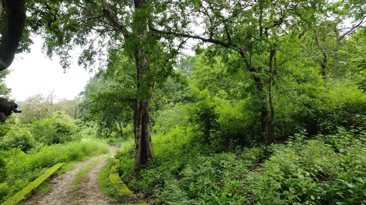 jhirna zone forest