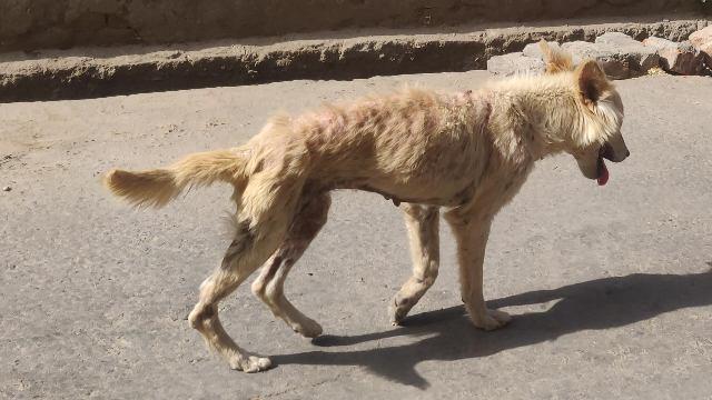 sick street dog-VILLAGE LIFE IN INDIA