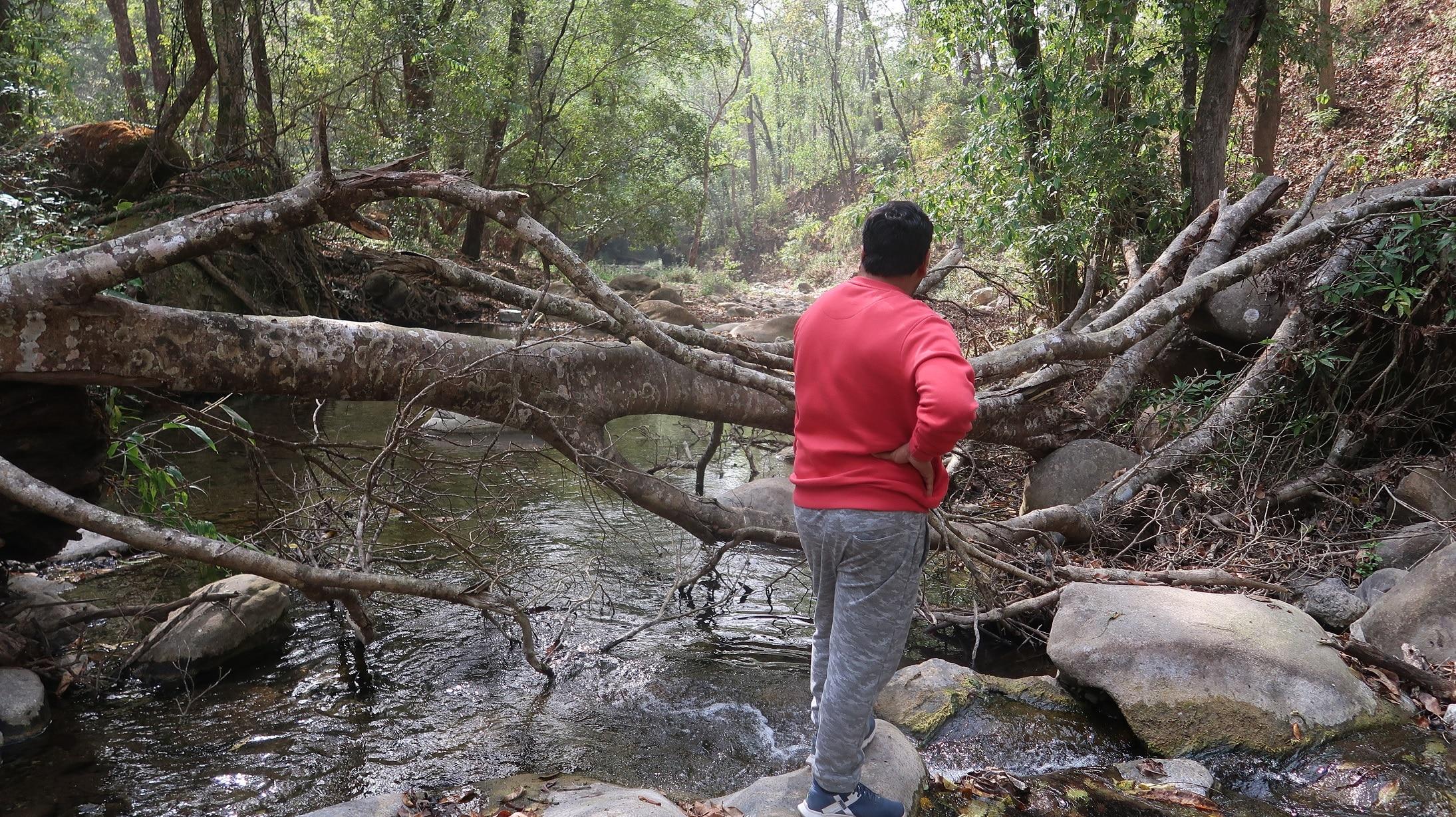 jim corbett national park forest